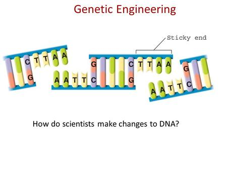 Genetic Engineering How do scientists make changes to DNA?