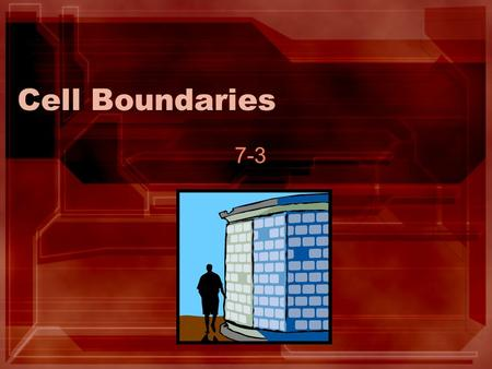 Cell Boundaries 7-3 The beginning and the end… 1. All cells have a cell membrane –Thin –Flexible 2. Some cells have additional support known as the cell.