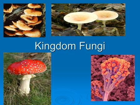 Kingdom Fungi.  For many years fungi were classified as plant. However, there are some characteristics that separate these two groups : 1. Plants have.