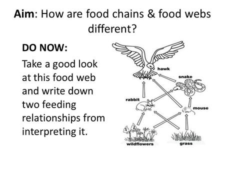 Aim: How are food chains & food webs different?