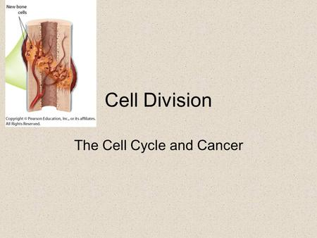 Cell Division The Cell Cycle and Cancer. The Phases of the Cell Cycle.