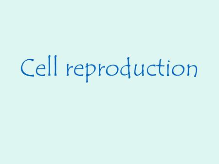 Cell reproduction. Cell theory states that all cells come from preexisting cells. Cell division is the process by which new cells are produced from one.