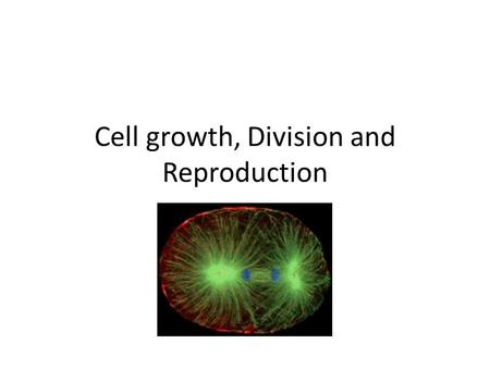 Cell growth, Division and Reproduction. Cell Division Produces 2 daughter cell Asexual Reproduction – produces genetically identical offspring from a.