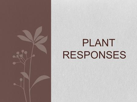 PLANT RESPONSES. Do plants have minds? ??? Read the article and decide for yourself.