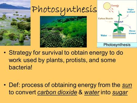 Photosynthesis Strategy for survival to obtain energy to do work used by plants, protists, and some bacteria! Def: process of obtaining energy from the.