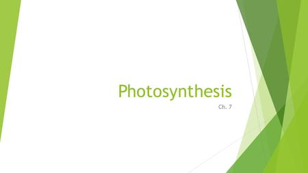 Photosynthesis Ch. 7. Photosynthetic Organisms  Photosynthesis coverts solar energy into the chemical energy of a carbohydrate.  Photosynthetic organisms.