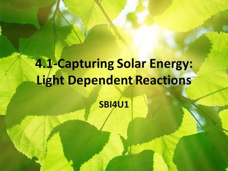 4.1-Capturing Solar Energy: Light Dependent Reactions SBI4U1.