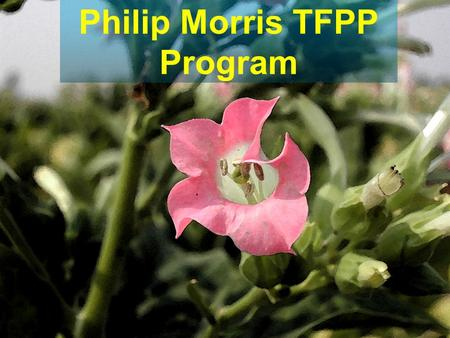 Philip Morris TFPP Program. Top Ten Ways to Increase Returns, Improve Yield, and Maintain Quality Gary Palmer.