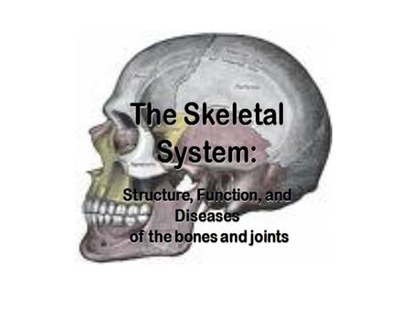 The Skeletal System Copyright © 2003 Pearson Education, Inc. publishing as Benjamin Cummings  Parts of the skeletal system  Bones (skeleton)  Joints.