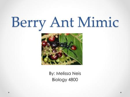 Berry Ant Mimic By: Melissa Neis Biology 4800. Examples of Other Parasite induced physiological changes Leucochloridium: Metacercariae imitating caterpillars.