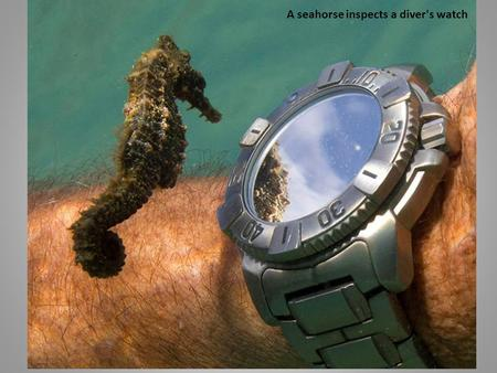 A seahorse inspects a diver's watch. An illuminated snow tunnel in Russia.
