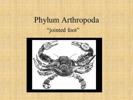 "Phylum Arthropoda ""jointed foot"". What is an Arthropod? An invertebrate with an exoskeleton, jointed appendages and a body that is divided into sections."
