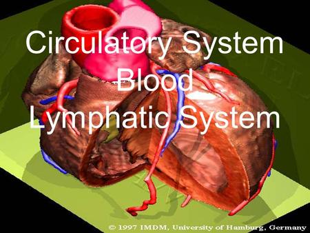 Circulatory System Blood Lymphatic System. The Heart & Blood flow.