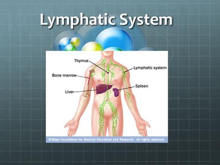 Lymphatic System. Root Words Pathogens Any foreign molecules that enter the body: Particles, viruses, bacteria, pollen, etc.