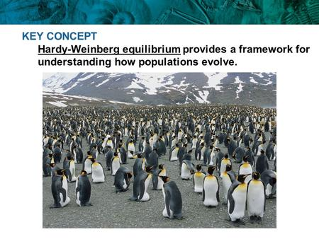 KEY CONCEPT Hardy-Weinberg equilibrium provides a framework for understanding how populations evolve.