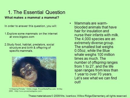 1. The Essential Question What makes a mammal a mammal? In order to answer this question, you will: 1.Explore some mammals on the internet at www.bigzoo.com.