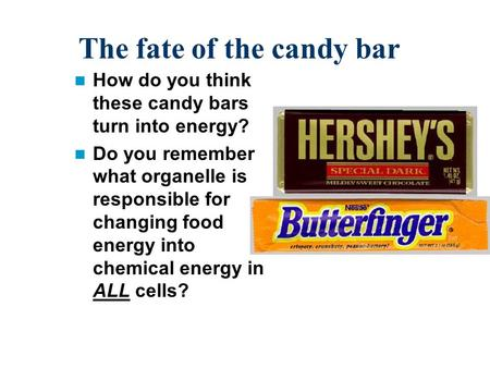 The fate of the candy bar How do you think these candy bars turn into energy? Do you remember what organelle is responsible for changing food energy into.