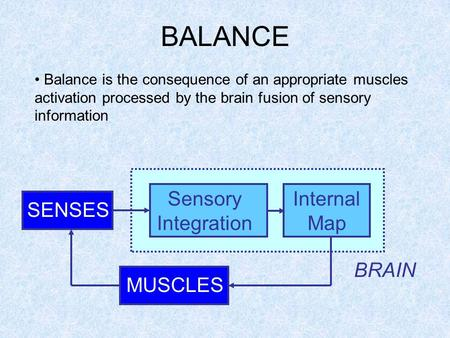 BALANCE SENSES MUSCLES BRAIN Sensory Integration Internal Map Balance is the consequence of an appropriate muscles activation processed by the brain fusion.