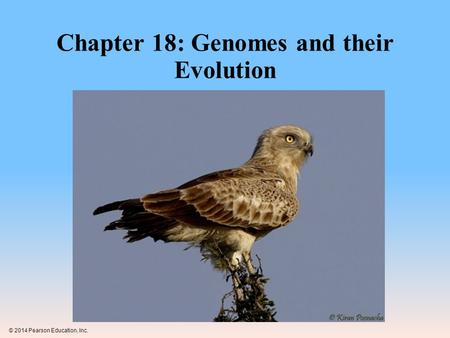 Chapter 18: Genomes and their Evolution