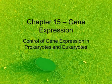 Chapter 15 – Gene Expression Control of Gene Expression in Prokaryotes and Eukaryotes.