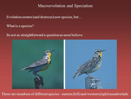 Macroevolution and Speciation