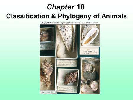 Chapter 10 Classification & Phylogeny of Animals