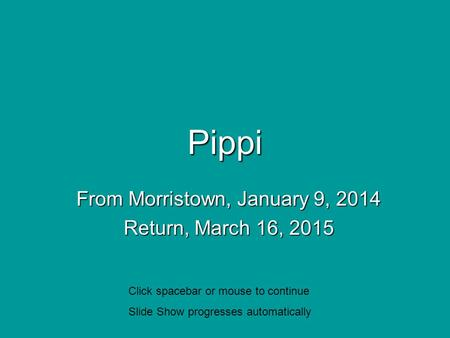 Pippi From Morristown, January 9, 2014 Return, March 16, 2015 Click spacebar or mouse to continue Slide Show progresses automatically.