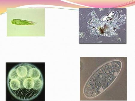 Let's Learn About These Cells What does it look like Special features Movement Feeding Reproduction.
