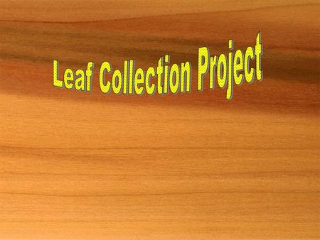 Collection Requirements  Collect ten species.  One species per page.  Must be a whole leaf;  especially for compound leaves.  Leaves must be green.