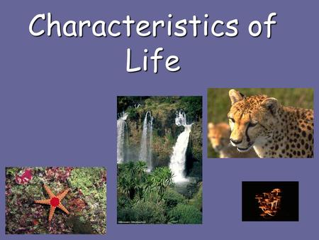 Characteristics of Life. What is alive Organisms include: bacteria, plants, animals, fungi, & protistOrganisms include: bacteria, plants, animals, fungi,