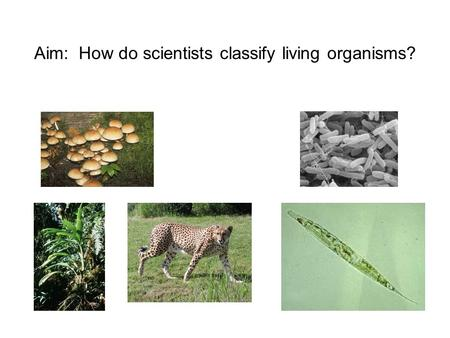 Why do scientists organize living things into groups?