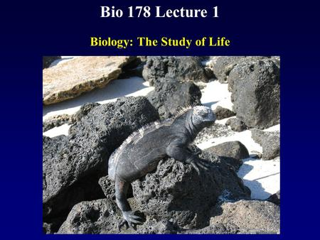 Bio 178 Lecture 1 Biology: The Study of Life. Reading Chapter 1 Quiz Material Questions on P18 Chapter 1 Quiz on Text Website (www.mhhe.com/raven7)