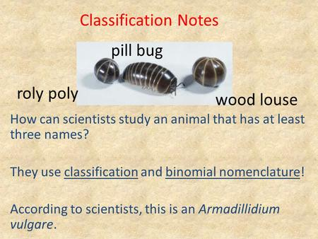 How can scientists study an animal that has at least three names? They use classification and binomial nomenclature! According to scientists, this is an.