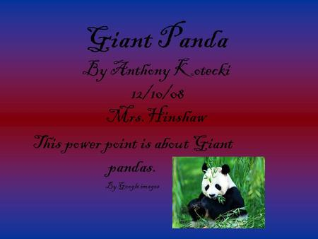 Giant Panda By Anthony Kotecki 12/10/08 Mrs.Hinshaw This power point is about Giant pandas. By Google images.