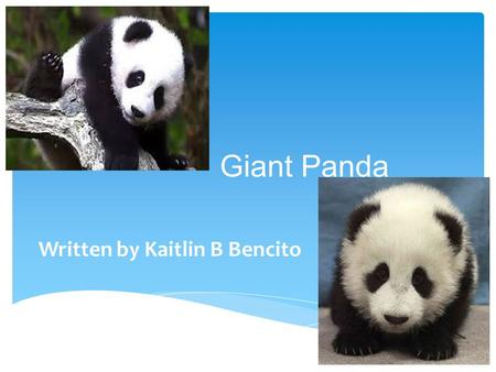 Giant Panda Written by Kaitlin B Bencito.  Pandas are black and white. They also have black arms, eyes, feet and their nose is black.  They are 1.5.