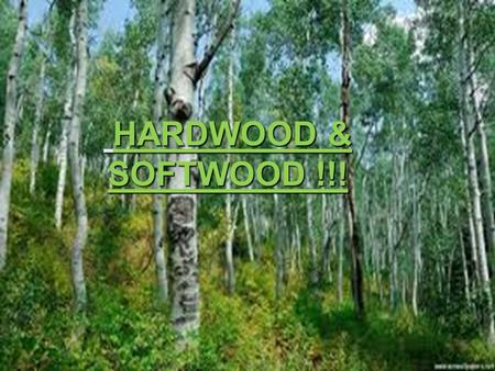 Hardwood & softwood HARDWOOD & SOFTWOOD !!!. hardwood Beech Used for furniture and toys. Oak Used for high class furniture. Mahogany Used for indoor furniture.