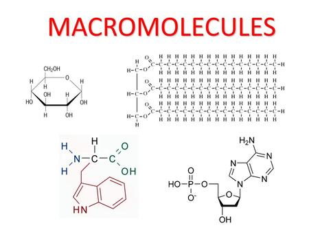 MACROMOLECULES. The four macromolecules are: Carbohydrates Proteins Lipids Nucleic acids.