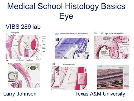 Medical School Histology Basics Eye VIBS 289 lab Larry Johnson Texas A&M University.
