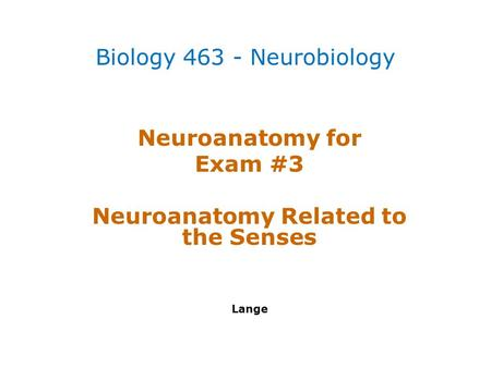 Neuroanatomy for Exam #3 Neuroanatomy Related to the Senses Lange