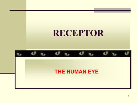 1 RECEPTOR THE HUMAN EYE. 2 INSTRUCTIONAL OBJECTIVE state the function of the different parts of the eye describe how a focused image of near and distant.