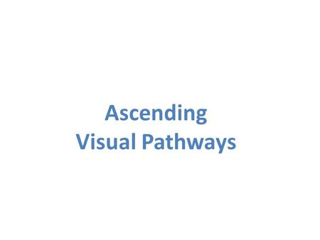 Ascending Visual Pathways. Retina-LGN-Cortical Route Optic Nerve Optic Chiasm Optic Tract LGN Superior Colliculus Primary Visual Cortex.