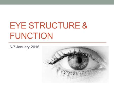 Eye structure & function