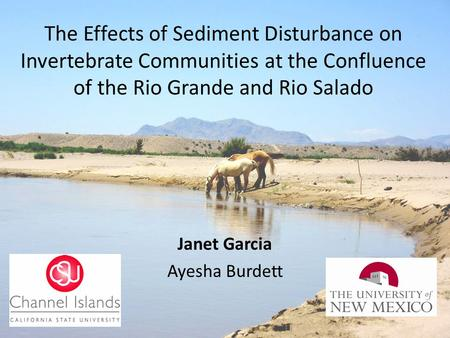 The Effects of Sediment Disturbance on Invertebrate Communities at the Confluence of the Rio Grande and Rio Salado Janet Garcia Ayesha Burdett.