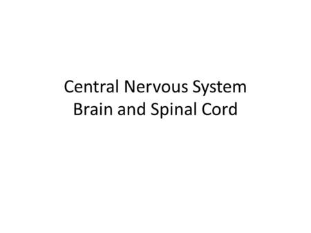 Central Nervous System Brain and Spinal Cord. Left BrainRight Brain Logical Sequential Rational Analytical Objective Looks at parts Random Intuitive Holistic.
