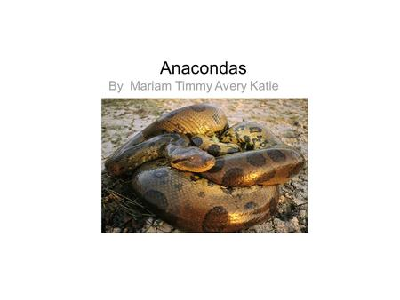 Anacondas By Mariam Timmy Avery Katie. Facts The green anaconda is the largest snake in the world. It can reach a length of 30 feet. They can be as big.