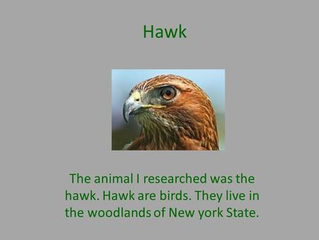 Hawk The animal I researched was the hawk. Hawk are birds. They live in the woodlands of New york State.