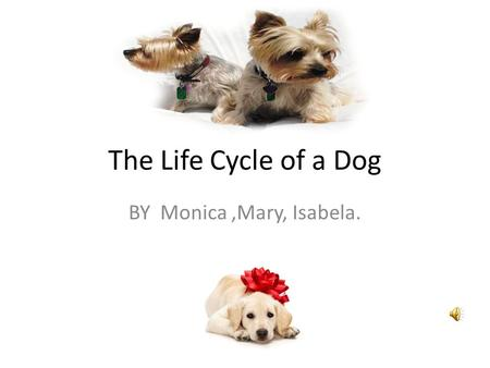 The Life Cycle of a Dog BY Monica,Mary, Isabela.