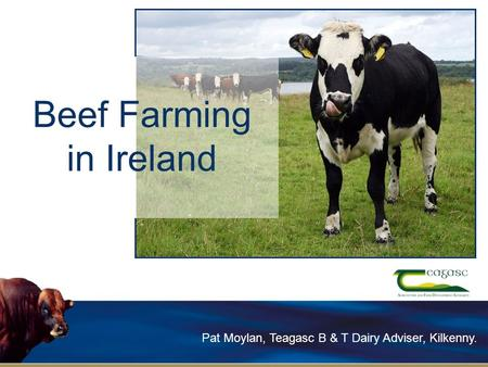 Beef Farming in Ireland