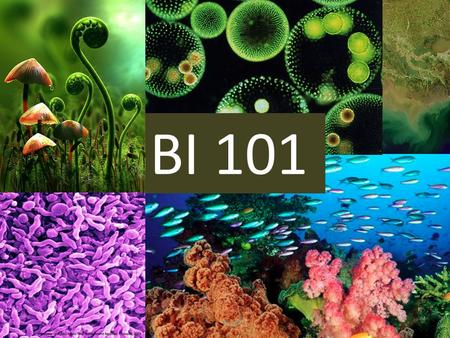 BI 101. BI101, 102 & 103 These are for non- science majors. – Meet transfer and program requirements for a science with lab. – Some nursing programs require.