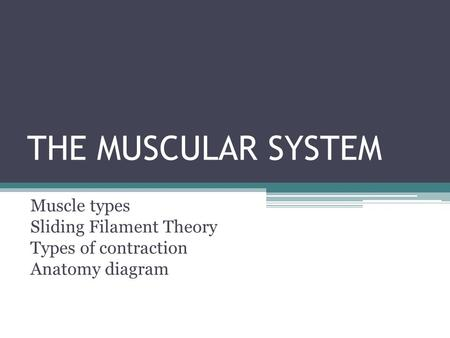 THE MUSCULAR SYSTEM Muscle types Sliding Filament Theory Types of contraction Anatomy diagram.